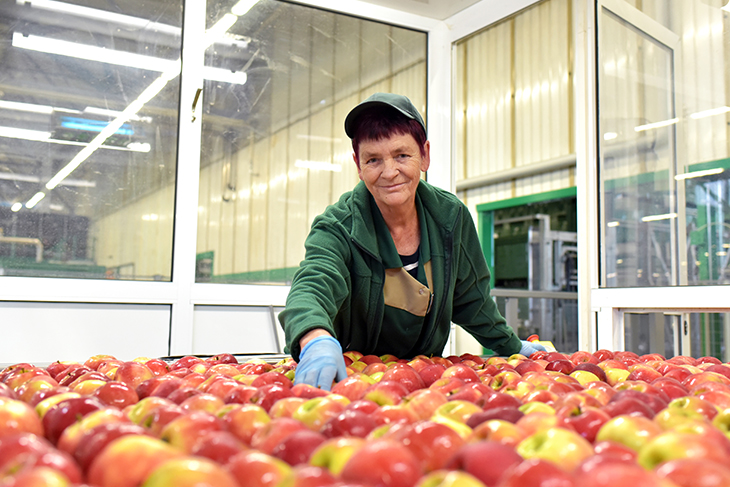 Smiling older woman sorting red apples in a food production facility